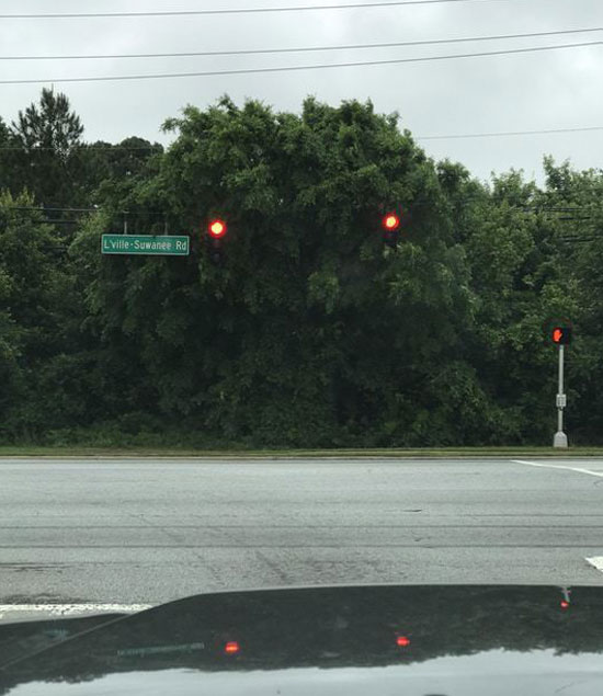 This tree looks incredibly angry