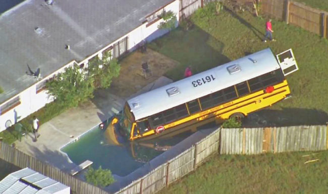 And here we see the wild school bus drinking from a pool