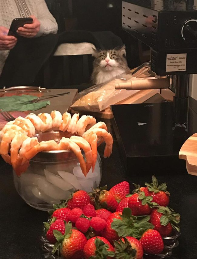 My mother in law's cat is obsessed with shrimp. She makes this face whenever there is shrimp on the table