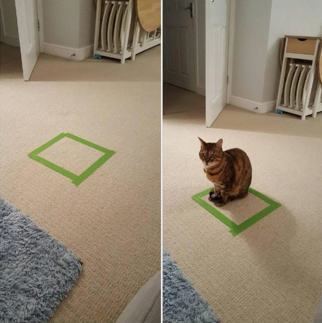 How to catch a cat. Draw a square and wait