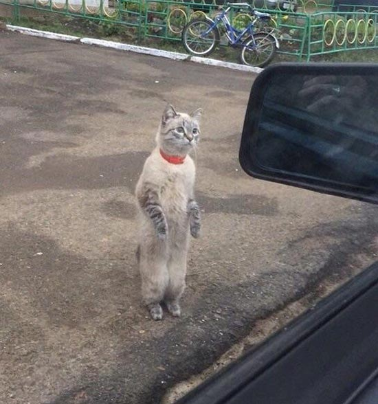 Cat: Excuse me sir, can you give me a ride home? Driver: Where's home? Cat: Your home
