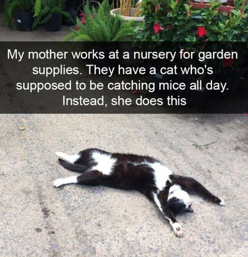 The mouse catcher