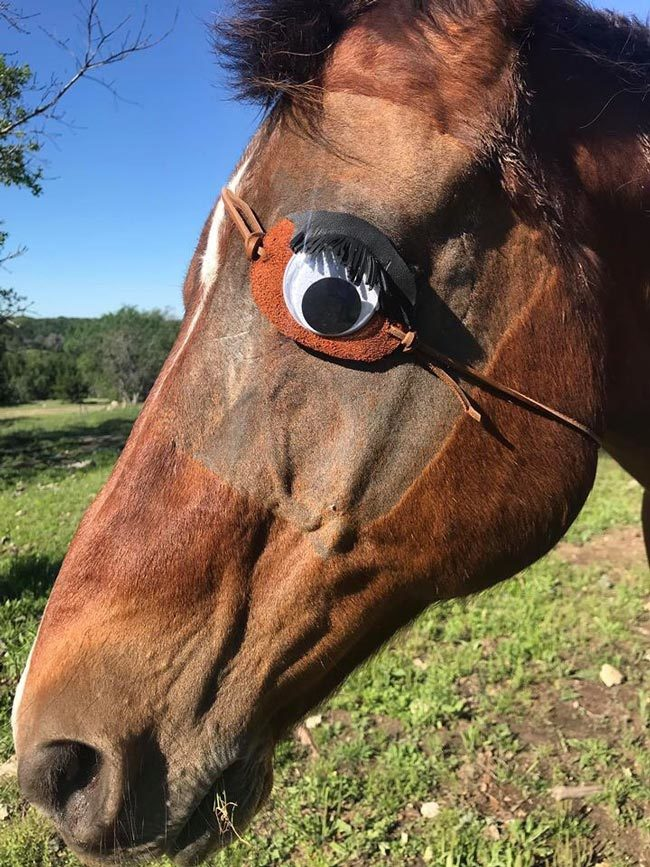 My horse had his eye removed, so I made him an eye patch