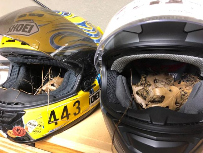 Going to the track today, but found that two nesting birds had more important plans for my helmets