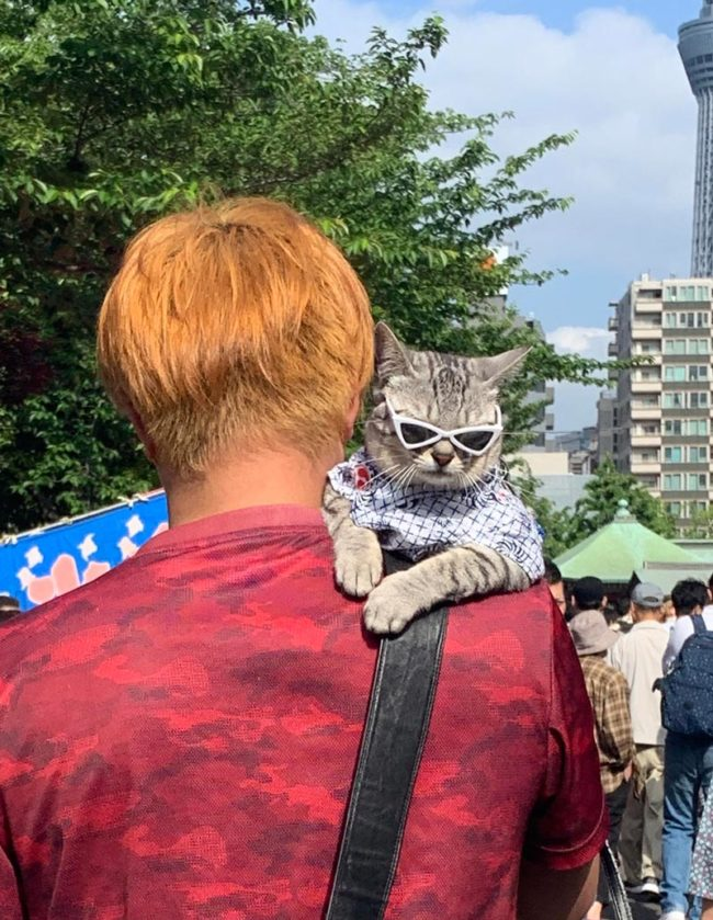 Meanwhile in Tokyo