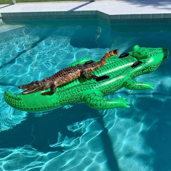 Gator: This inflatable sex doll was worth every penny