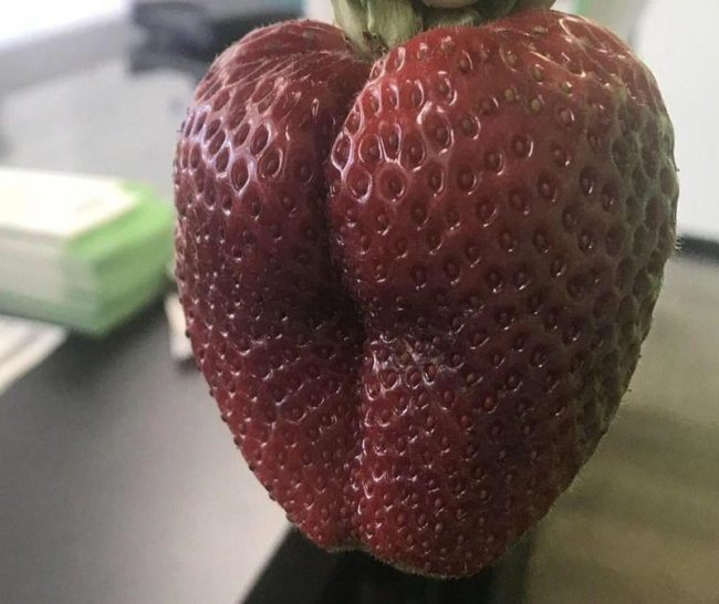 Thick and juicy, now that's my jam