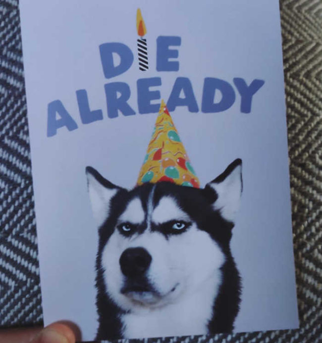 My 4 year old niece can't read and bought me this birthday card because it featured 'A cute dog with a party hat'