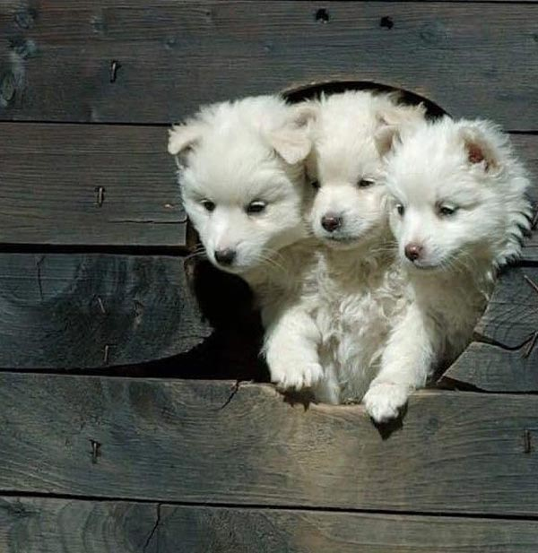 Cerberus, the Puppy years