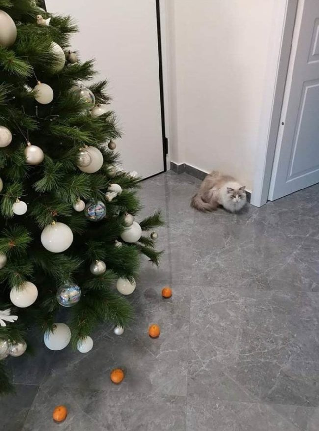 Cat is afraid of tangerines, so I've created a force field to protect the Christmas tree