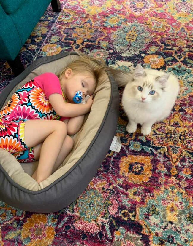 Tiny human steals cat's bed at nap time
