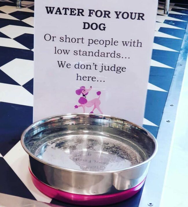 Water for your dog..