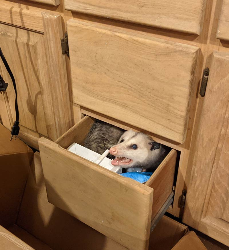 Guess this is her drawer now