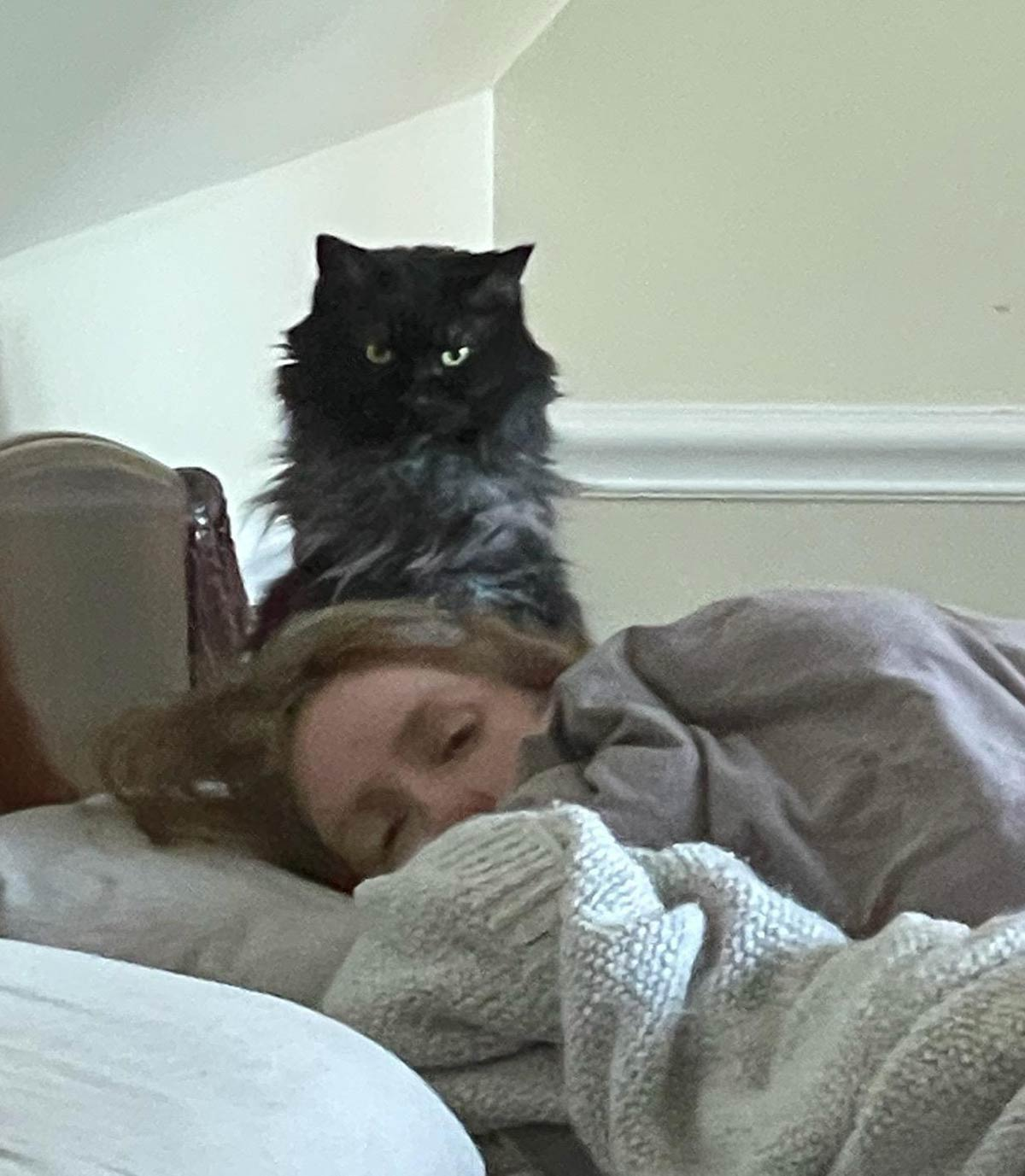 Husband caught our cat hovering over my sleeping body